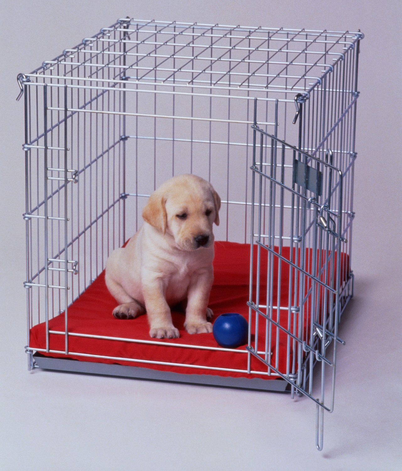 Crate Training Adult Dog