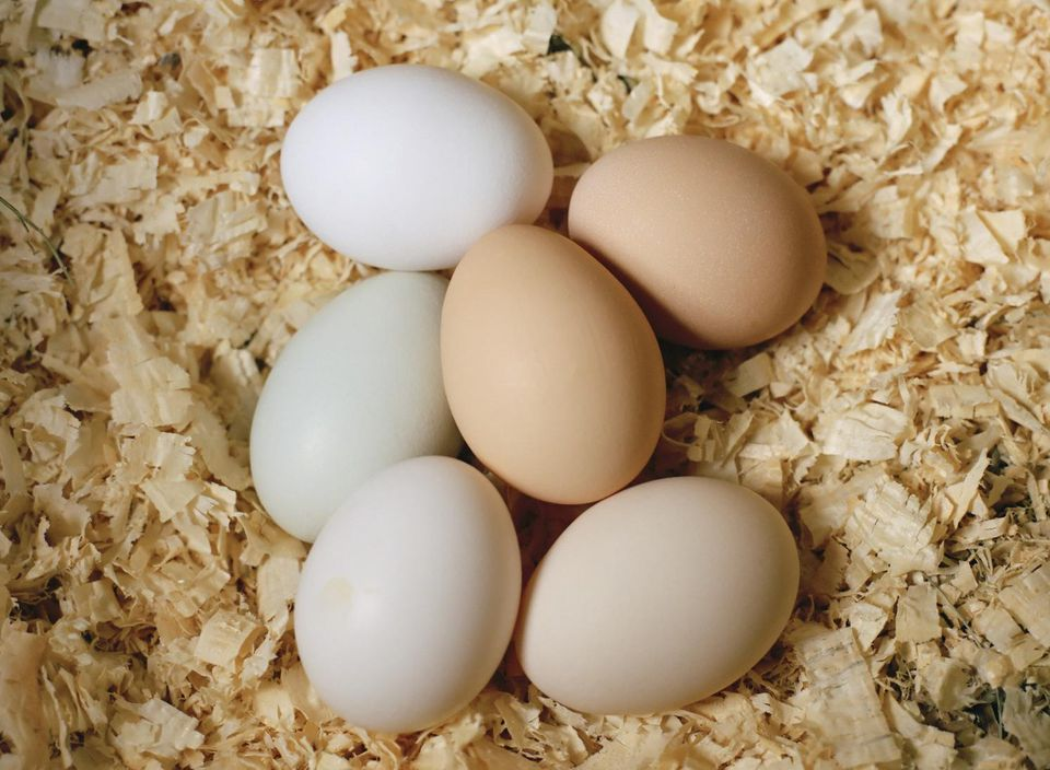 Close-up of chicken eggs in a nest
