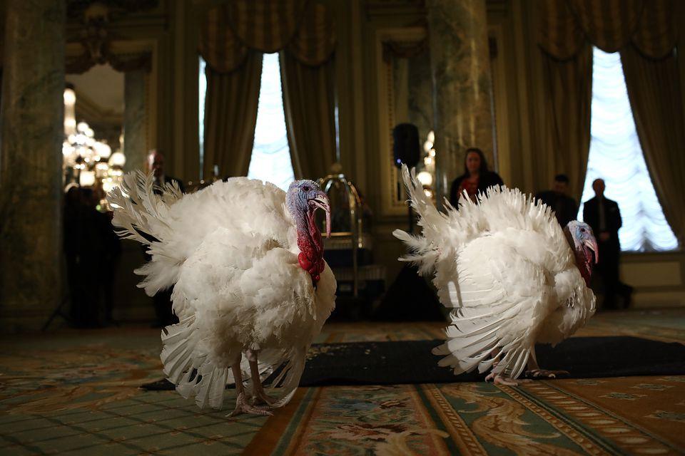 Turkey pardon DC
