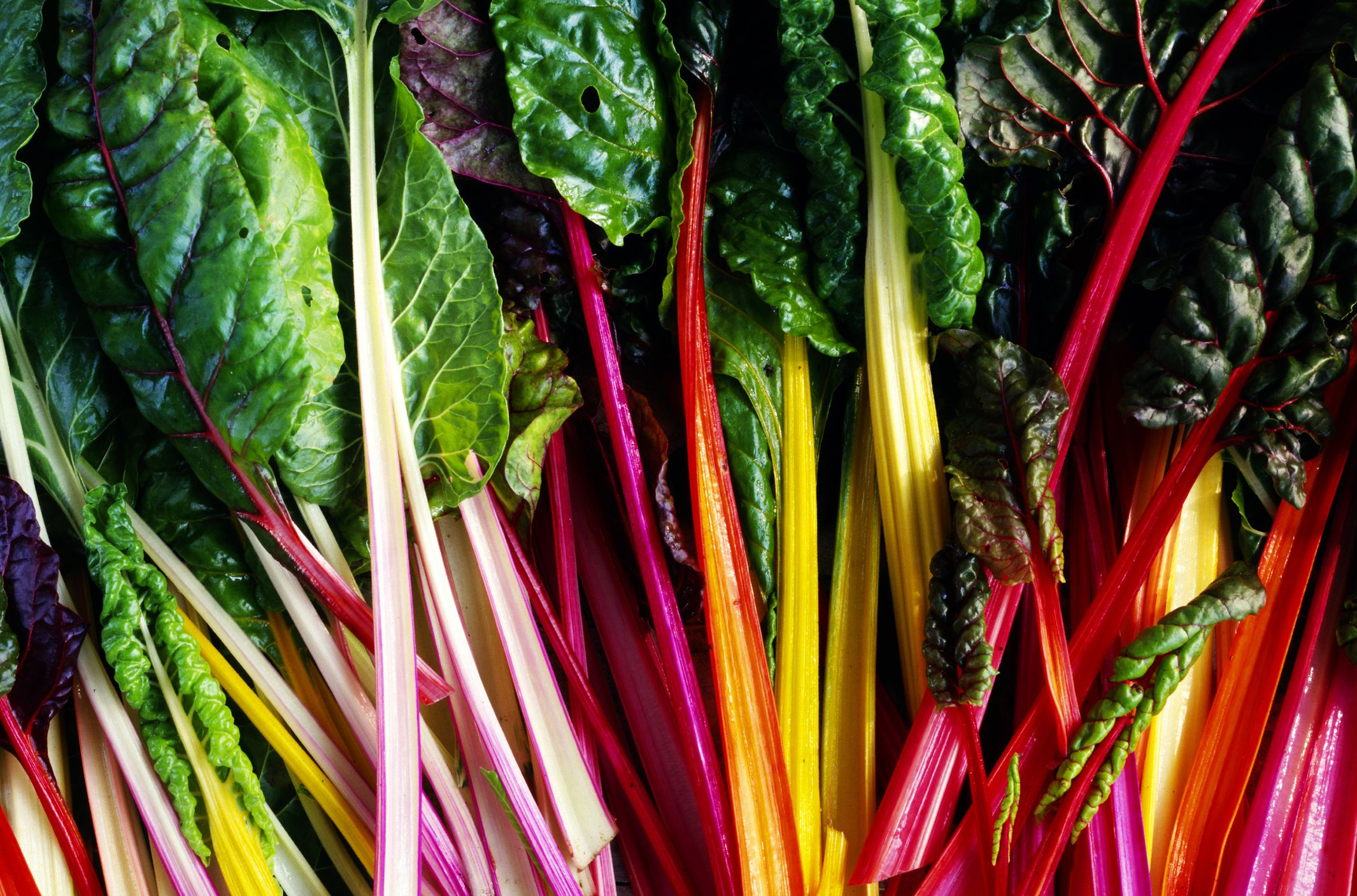 All About Colorful Rainbow Chard With Recipes Watermelon Wallpaper Rainbow Find Free HD for Desktop [freshlhys.tk]