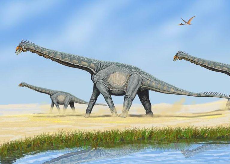Top 10 Herbivorous Dinosaurs 1 My Favourite Dinosaur Triceratops Home