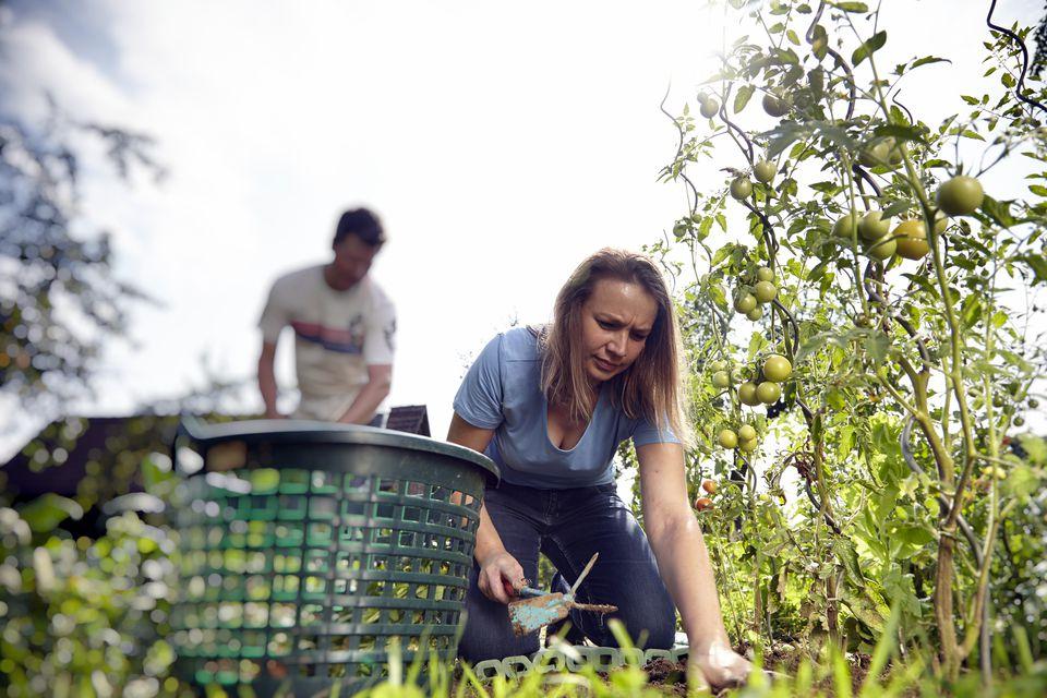 Garden-Basket.jpg