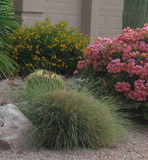 Easy desert shrubs and bushes for your garden for Easy ornamental grasses