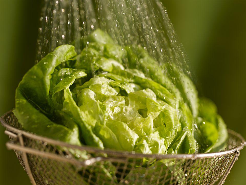 Bibb lettuce being rinsed