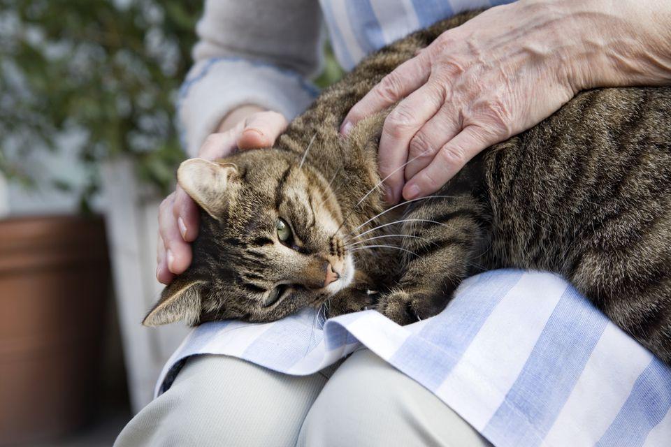 An elderly Scandinavian woman strokes cat on lap Sweden.