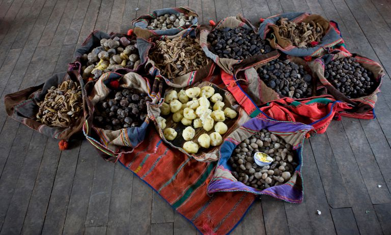 Eleven Varieties of Potatoes from Bolivia