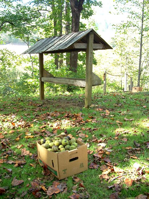 Boxed Black Walnuts Under Tree