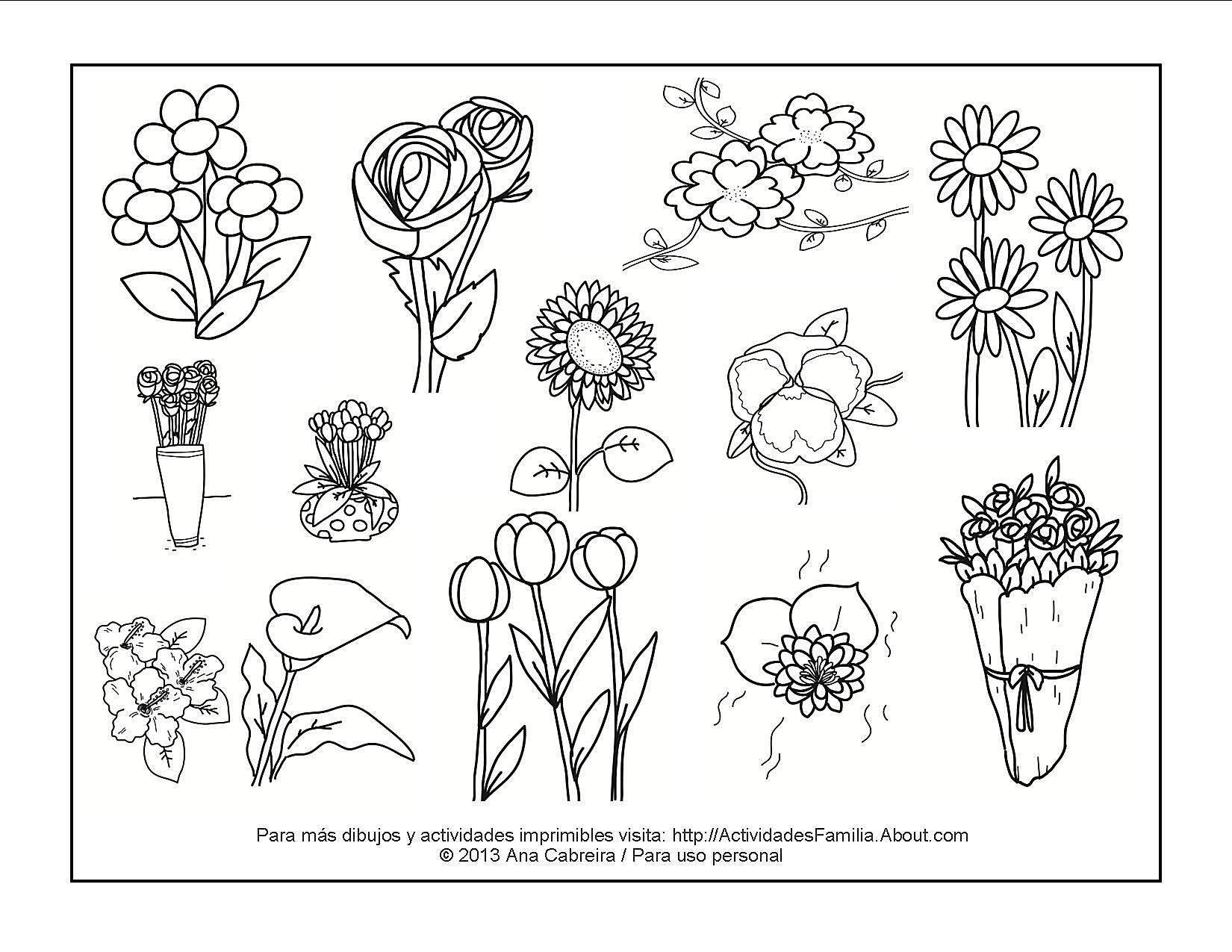 Dibujos de flores para colorear for Plantas ornamentales para colorear