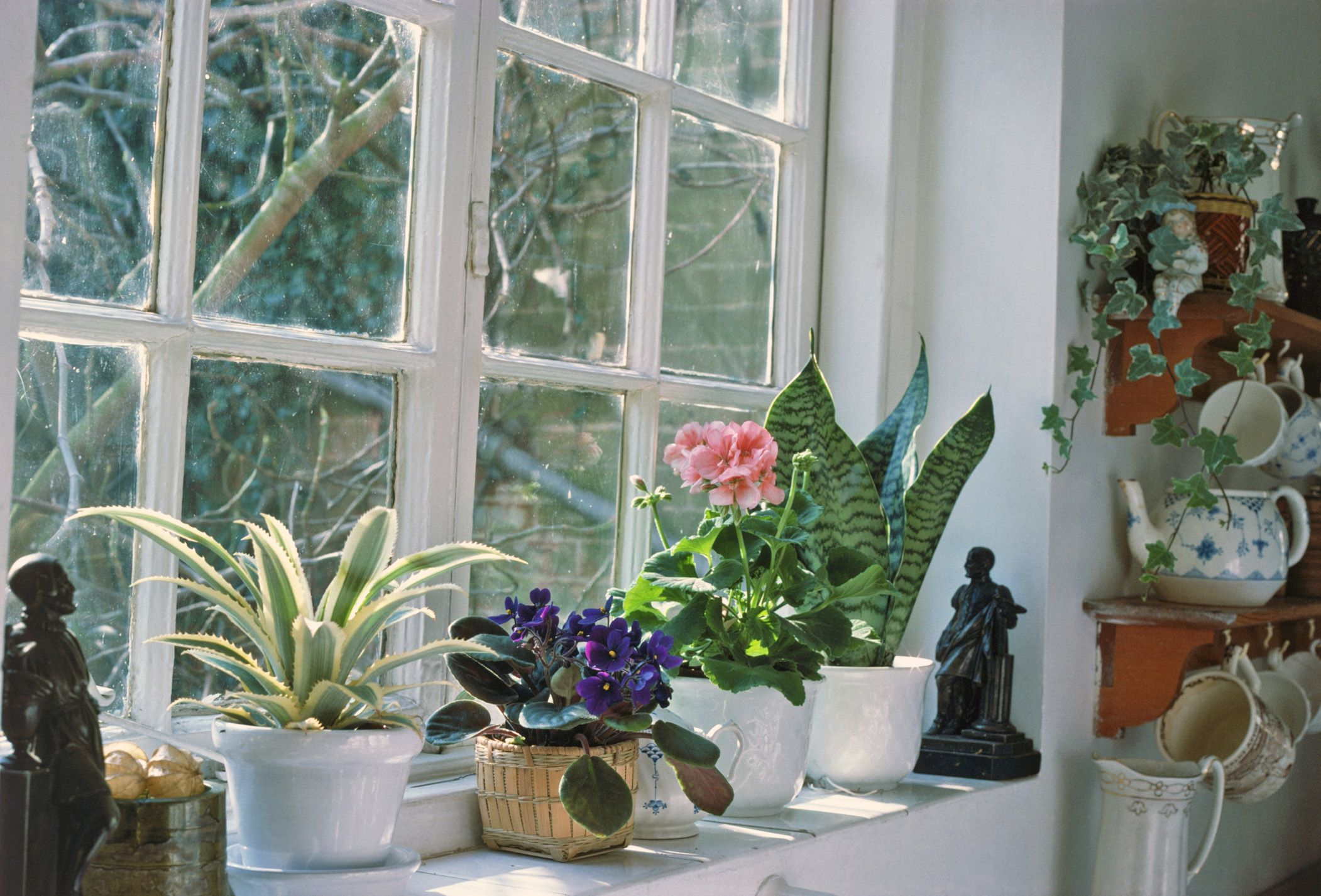 winter care of houseplants - House Plants
