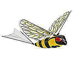 Radio Control I-Fly Wasp Image courtesy of Discovery Channel Store