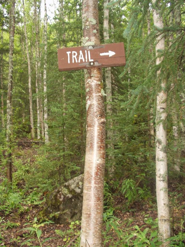 "A sign labeled ""Trail,"" with an arrow pointing the way, mounted on a tree."