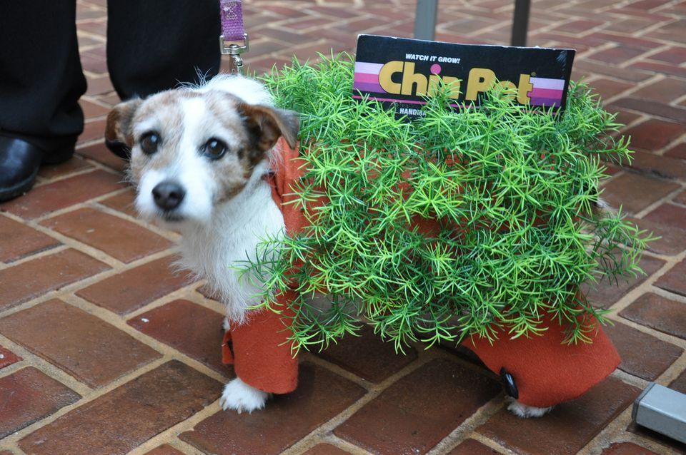 Chia-Pet.jpg