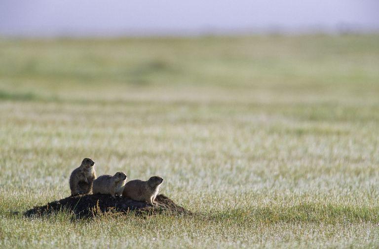 temperate grasslands climate vegetation animals