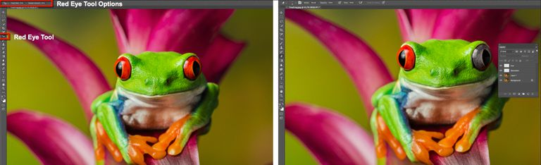 The Tree Frog image on the left shows the Red Eye Tool and the Tool Options. The image on the right shows the use of layers.