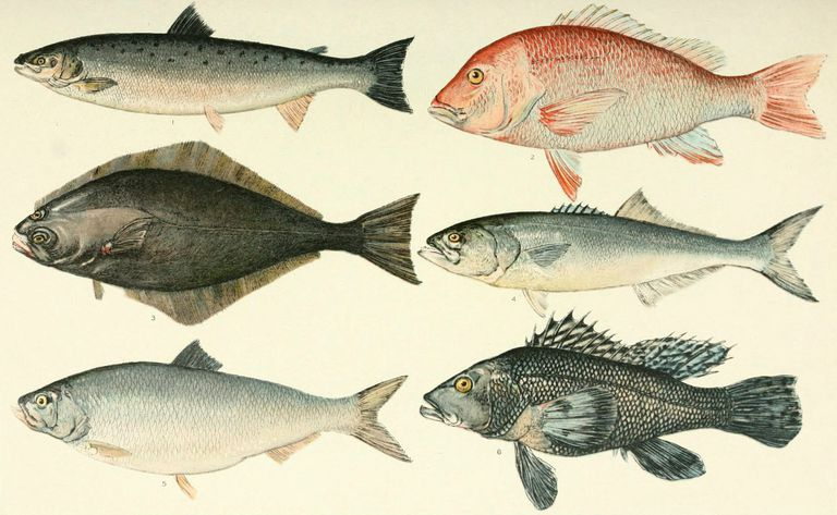 several fish