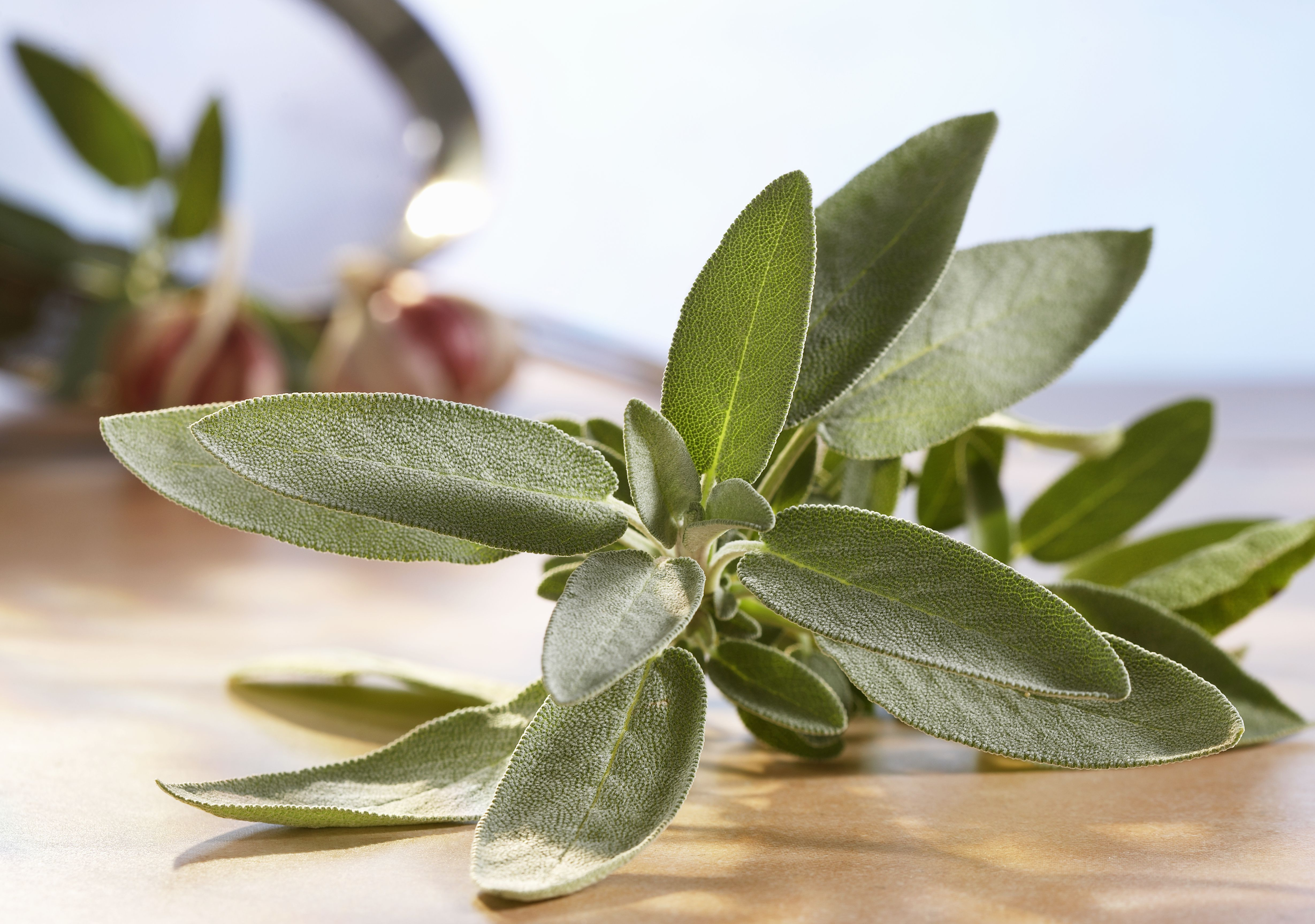 Herbs And Spices Sage Tips Recipes And History