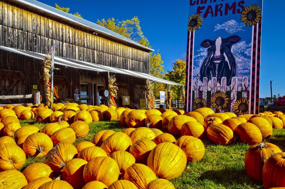 Pumpkin for sale at a farm near Barrie in Ontario, Canada
