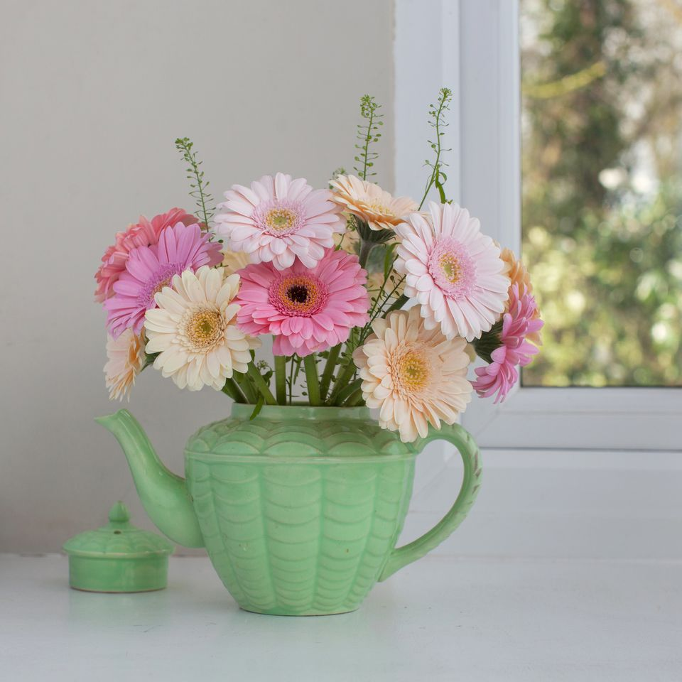 Learn How To Grow Gerber Daisies