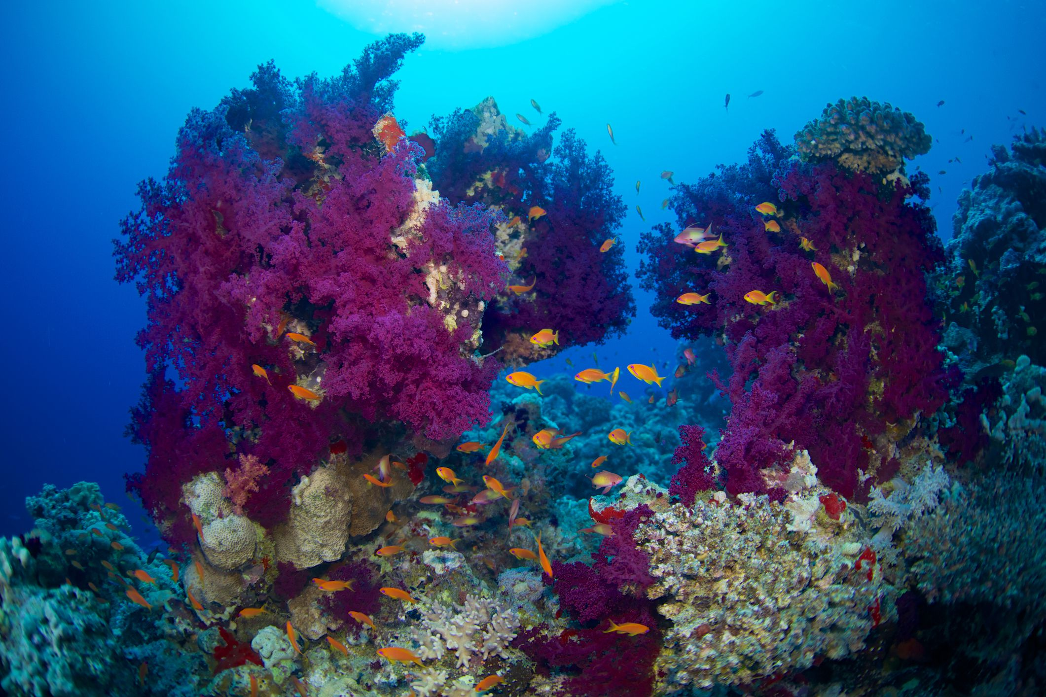 7 of the best scuba diving destinations in africa - Best dive trips ...