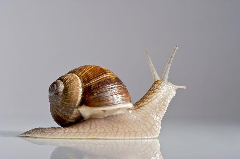 snail on glass