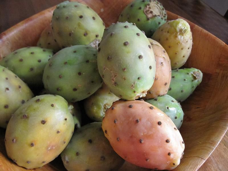 Prickly Pears El Karmouss El Hindi
