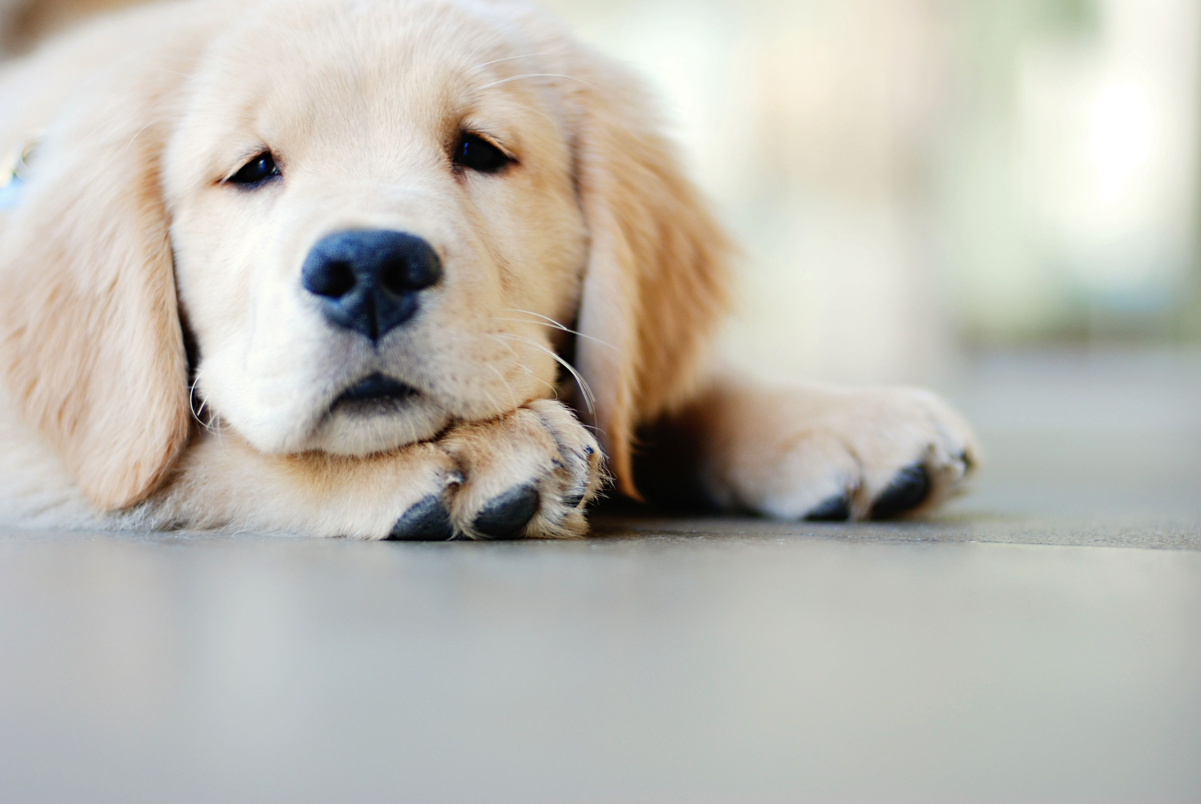 Parvovirus Aftermath Disinfecting Your Home