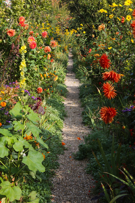 dahlia path - Flower Garden Path