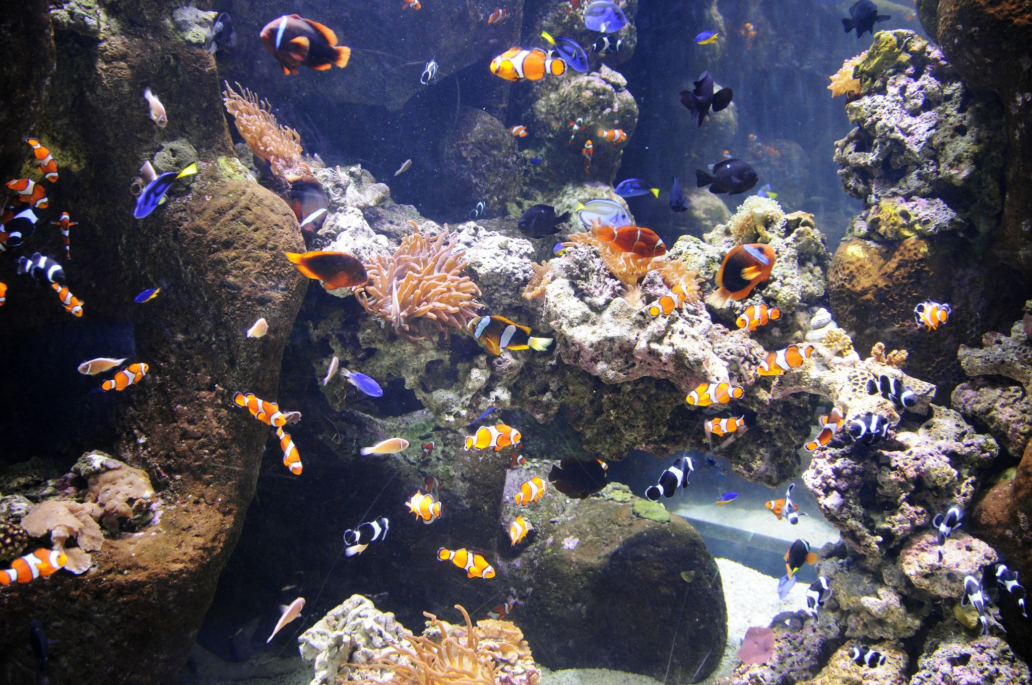Solving leaky glass aquarium problems for How to fix a leaking fish tank