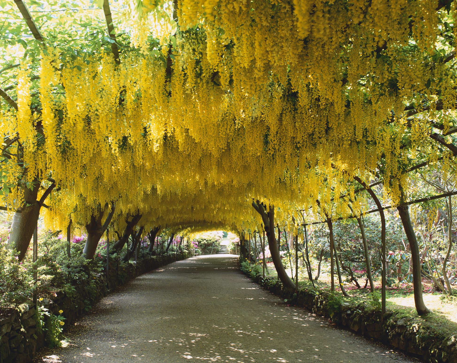 12 Best Landscape Trees To Add To Your Yard