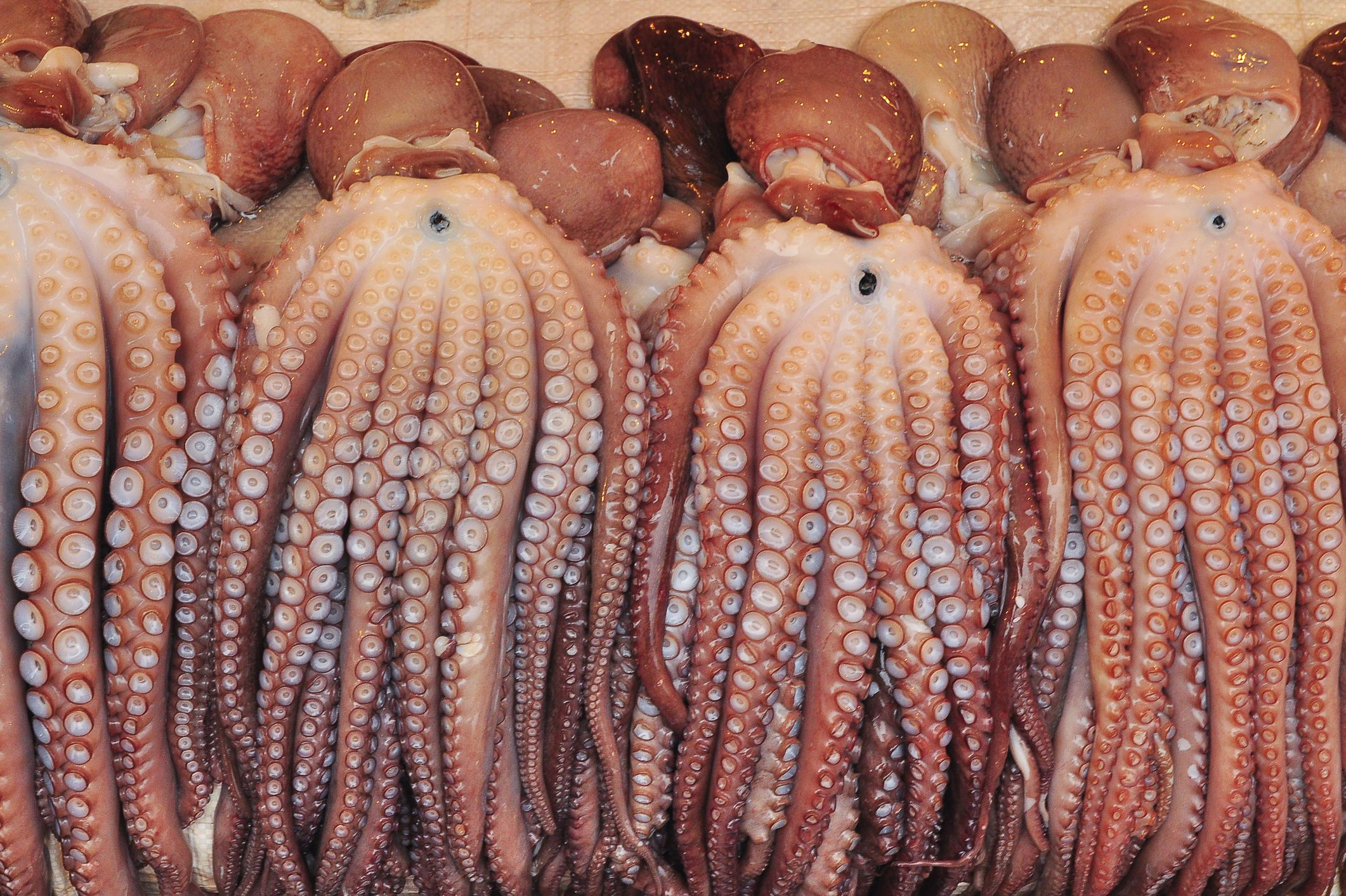 10 Facts About Mollusks