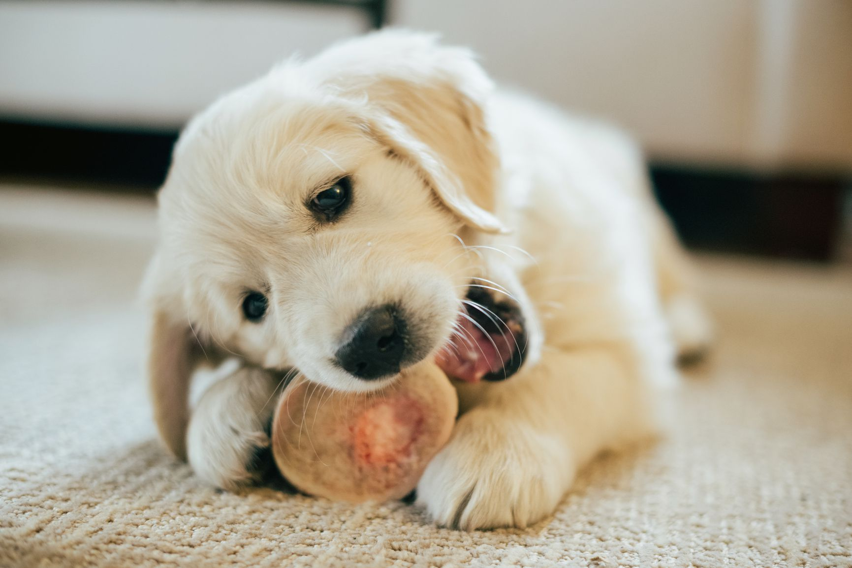 What Bones Are Safe For Small Dogs