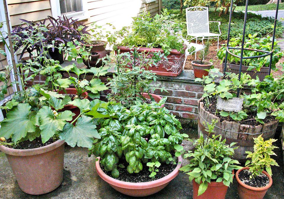 Tips for growing vegetables in containers - Container gardening basics ...