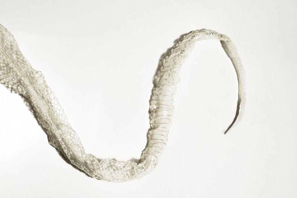 Old snake skin shed off a python