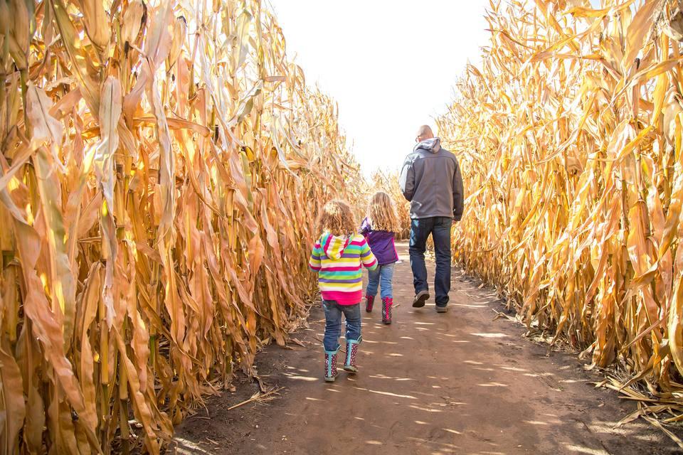 Corn mazes Seattle