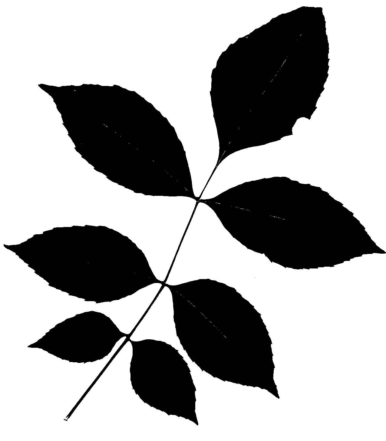 the difference between a simple and compound tree leaf