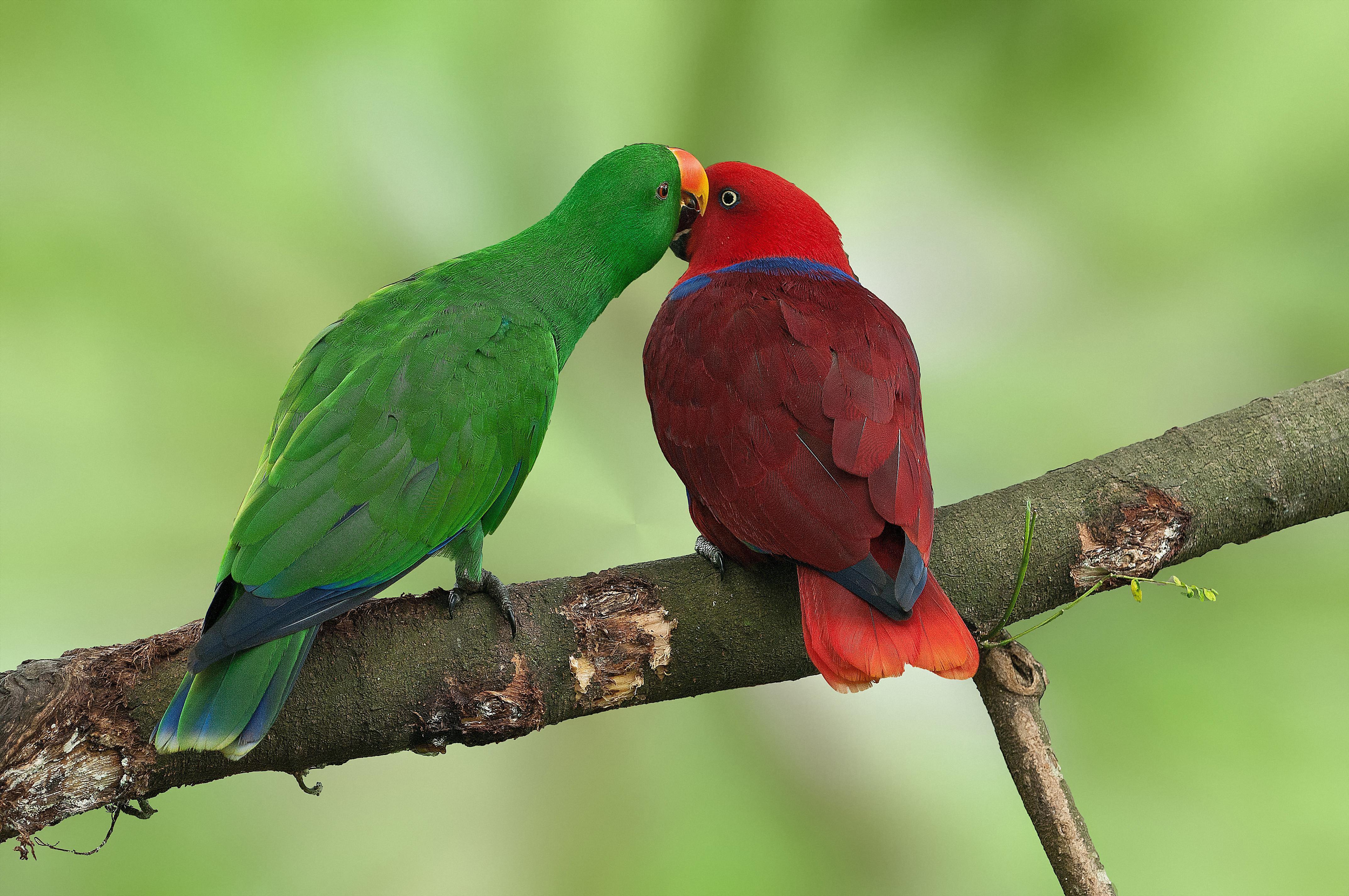 Amazon Parrot Food List