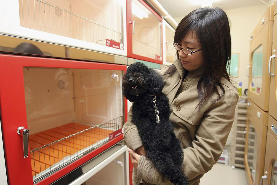 NARITA, JAPAN - DECEMBER 7: A customer inspects rooms at a large pet hotel located at Narita International Airport on December 7, 2005 in Narita, Japan.