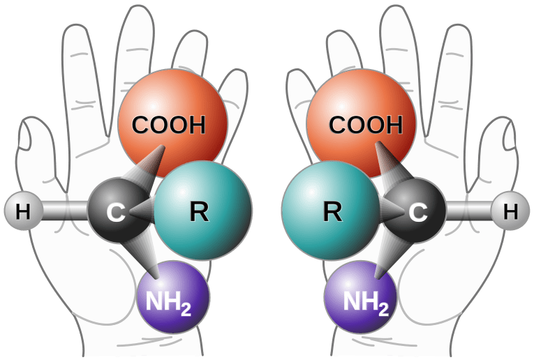 This is an example of chirality of amino acids.