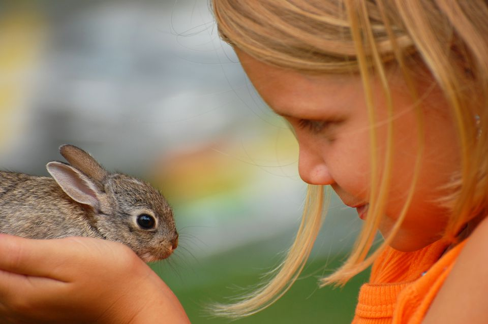 Cottontail Love