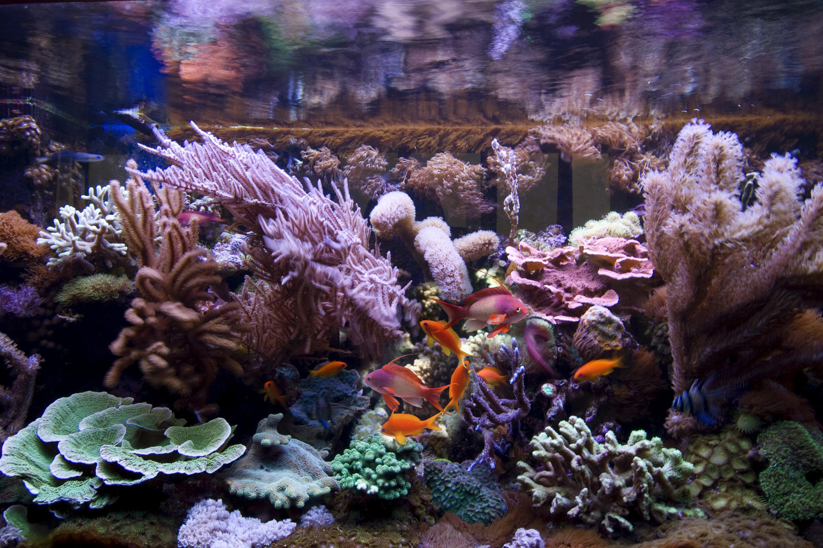 168264180-56a81f0a5f9b58b7d0f0db3b Frais De Aquarium Recifal Complet Concept