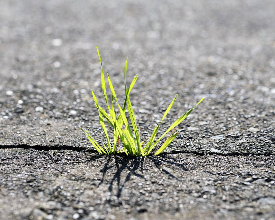 Grass-in-Driveways.jpg