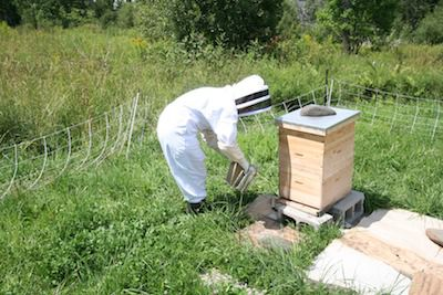 Getting ready to open the hive.