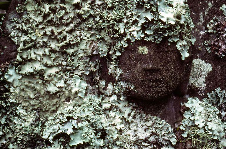 Lichen Buddha