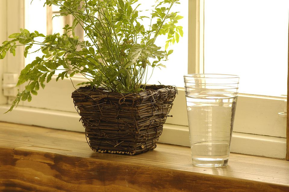 Close-up of a potted plant with a glass on a window sill