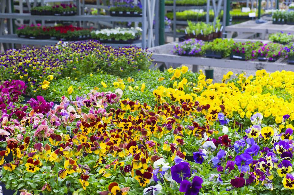 Best Garden Nurseries in San Diego