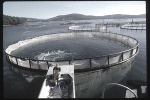 Fish farm