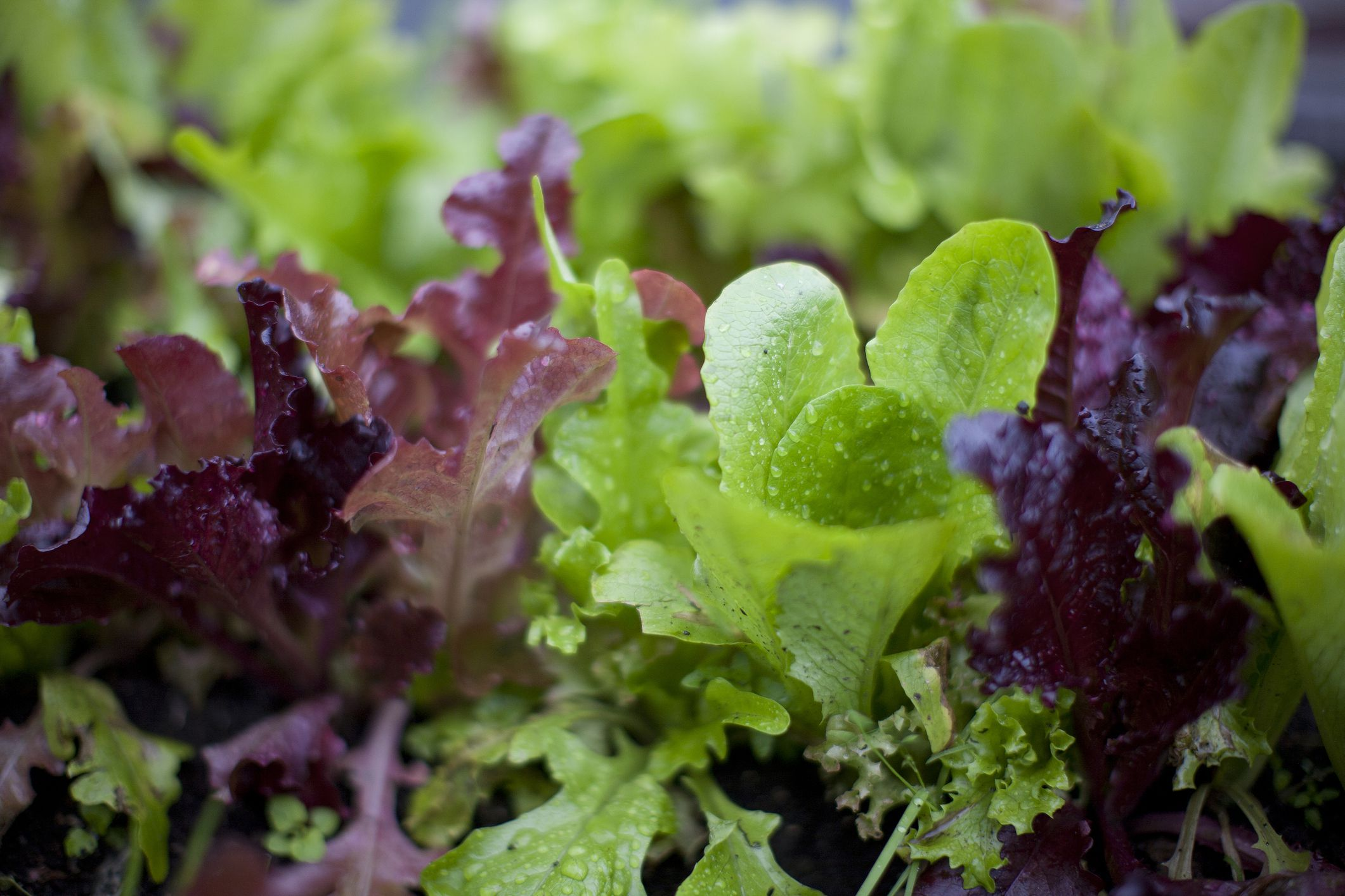 Guide To Fresh Spring Greens For Salads