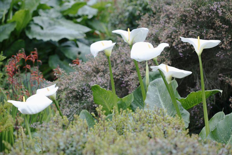 Plantas con flores para decorar tu casa