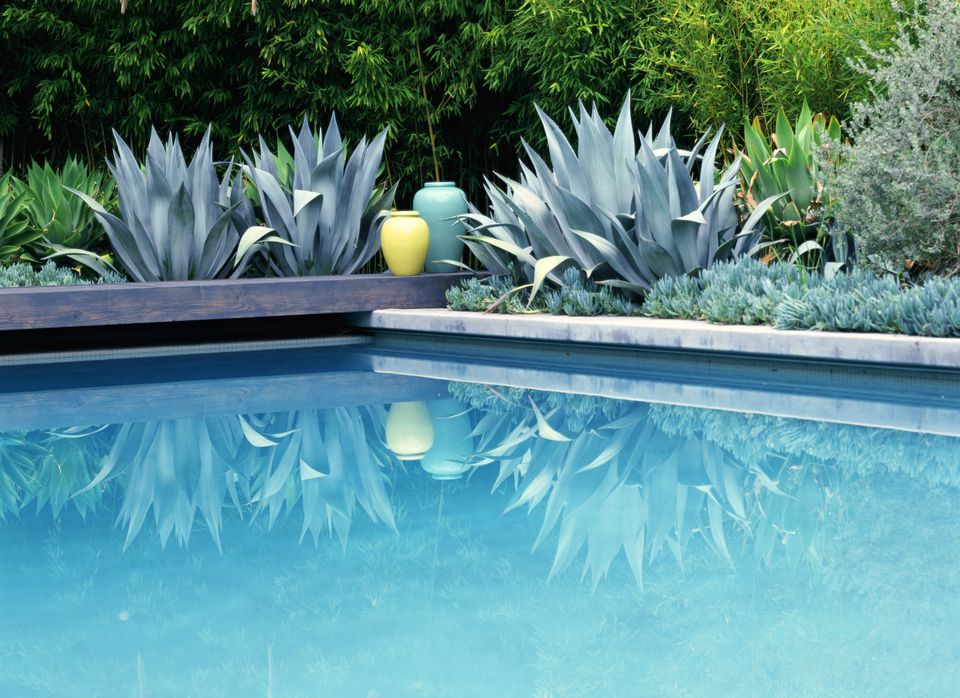 What to consider before landscaping by a swimming pool Best plants for swimming pool landscaping