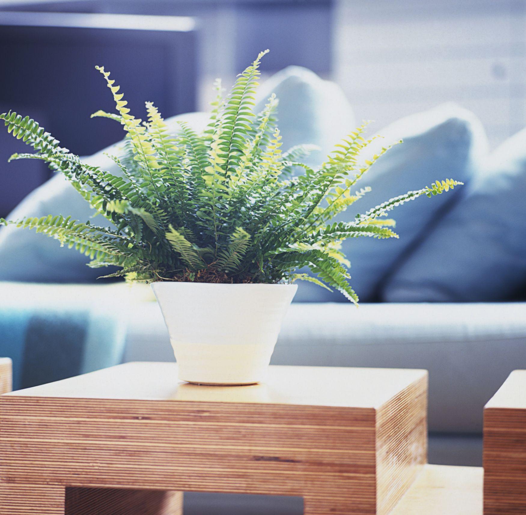 5 easy ways to make your living room healthier - Plantas resistentes de interior ...